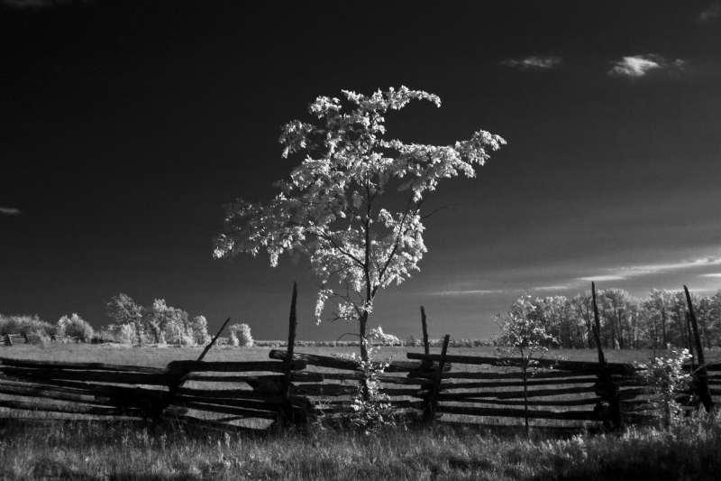 MANITOULIN-ISLAND-Rustik-fence-with-tree-IR-CRW_4695