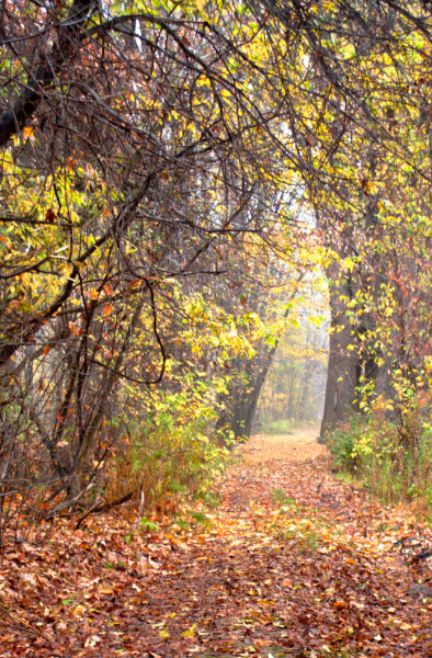 Fall-Leaves-Bruce-trail-2002-DSC_0120