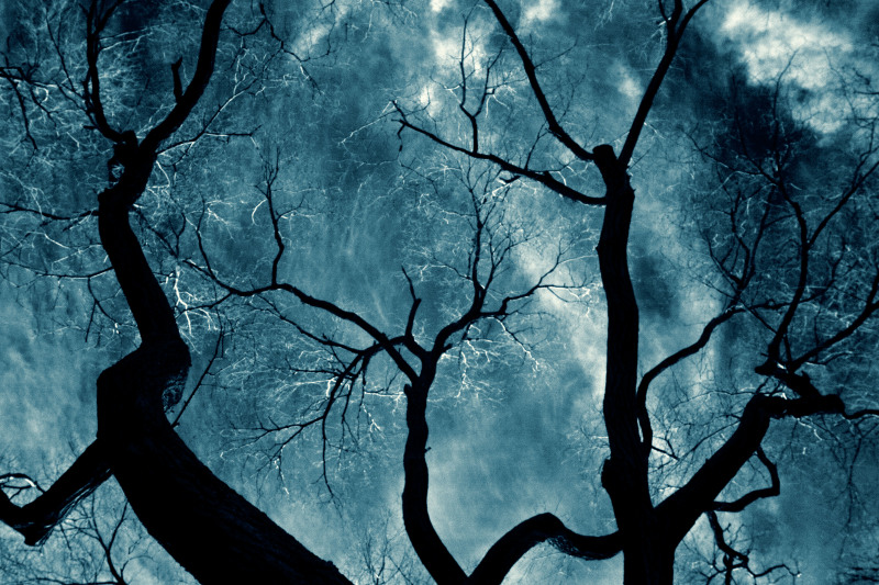Toronto-2012-IR-Trees-without-leaves-CRW_4498-Cyanotypes