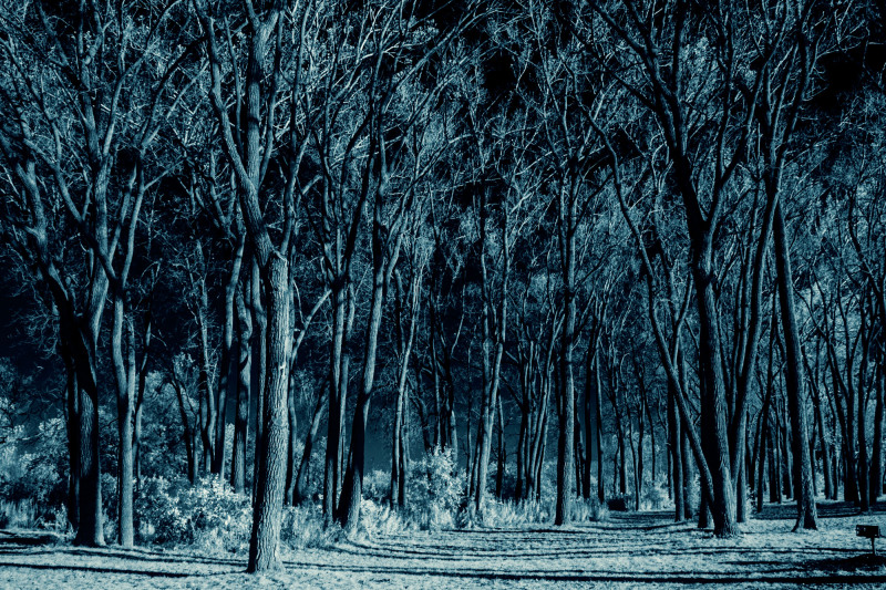 Toronto-2013-IR-Cherry-Beach-CRW_8618-Cyanotypes